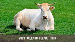 2021 год какого животного