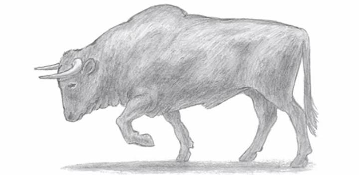 Инструкция по поэтапному рисованию быка на Новый 2021 год