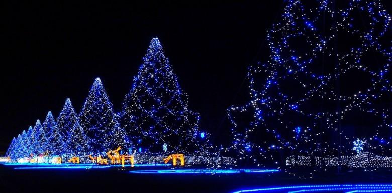 новогодние елки в новосибирске