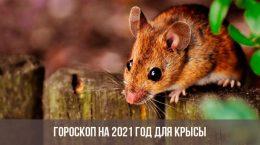 Гороскоп на 2021 год для Крысы