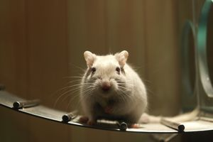 Гороскоп для Крысы в 2021 году