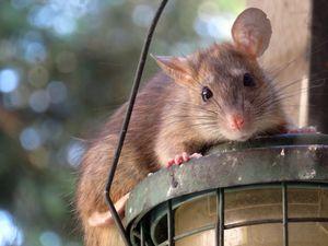 Гороскоп карьеры на 2021 год для Крыс