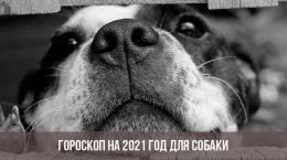 Гороскоп на 2021 год для Собаки