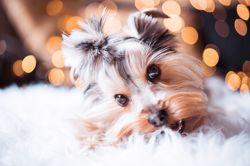 Гороскоп для женщины-Собаки на 2021 год