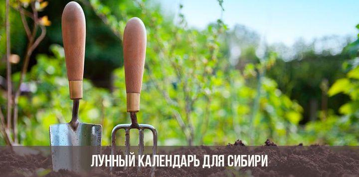 Календарь посадок для Сибири
