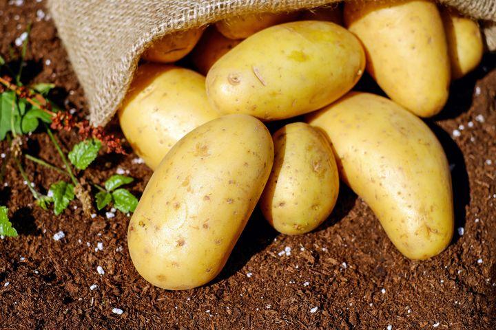 Посадка картофеля в 2021 году