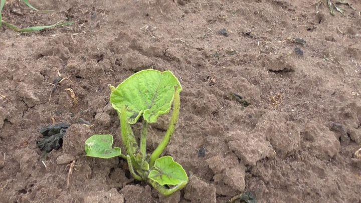 Заморозки на почве