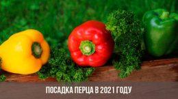 Посадка перца в 2021 году