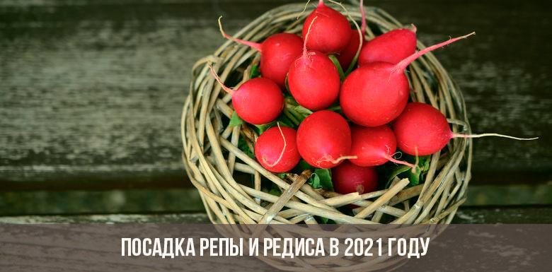 Посадка репы и редиса в 2021 году