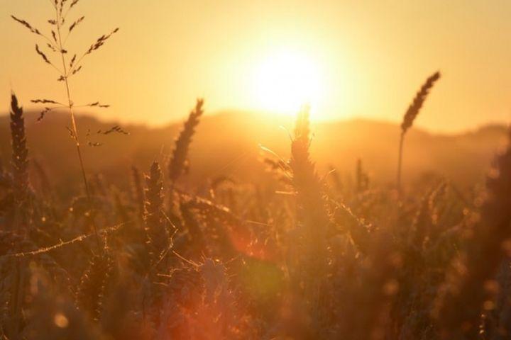 Закат солнца в полях