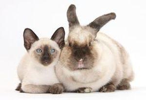 Гороскоп на 2021 год для женщины-Кролика (Кота)
