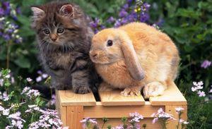 Любовный гороскоп для Кота (Кролика) на 2021 год