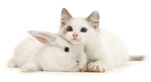 Денежный гороскоп на 2021 год для Кота (Кролика)
