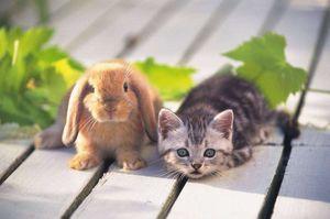 Гороскоп здоровья на 2021 год для Кота (Кролика)