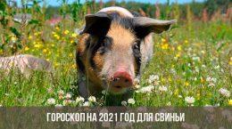 Гороскоп на 2021 год для Свиньи