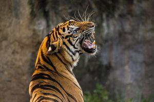 Гороскоп на 2021 год для мужчины Тигра