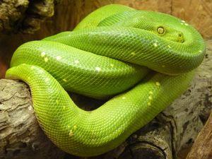 Гороскоп для женщины-Змеи на 2021 год