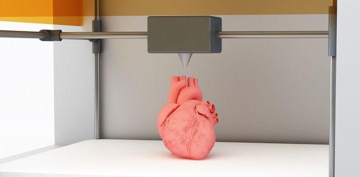 Печать внутренних органов