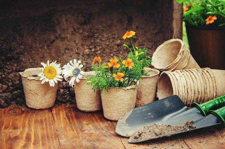 Горшки для рассады цветов