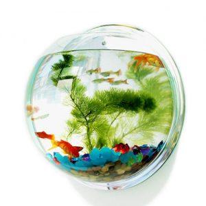 Настенный аквариум и другие прикольные подарки на Новый 2021 год