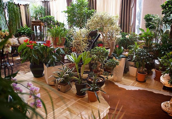 Гостиница для цветов