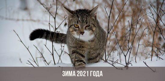 Зима 2021 года
