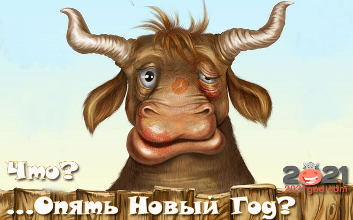 Картинка прикол с быком на Старый Новый Год 2021