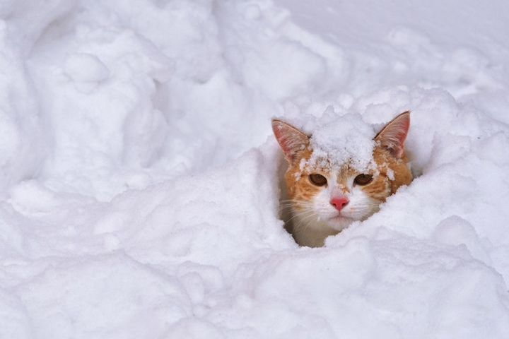 Рыжий кот в сугробе