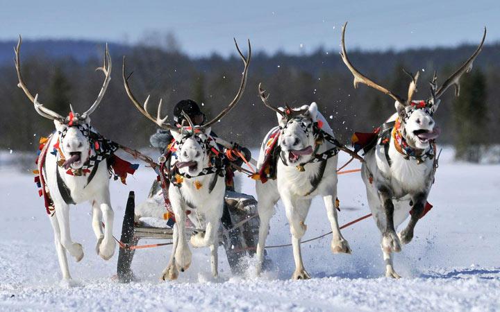 Каким будет Праздник Севера в Мурманске в 2021 году